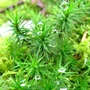 Forest_moss