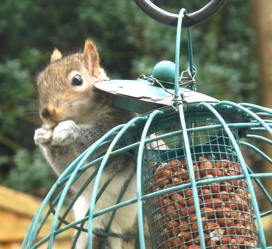 The not-so-squirrel-proof bird feeder
