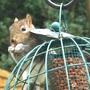 The not-so-squirrel-proof bird feeder