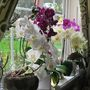 Indoor_orchids