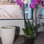 my new orchid's pot