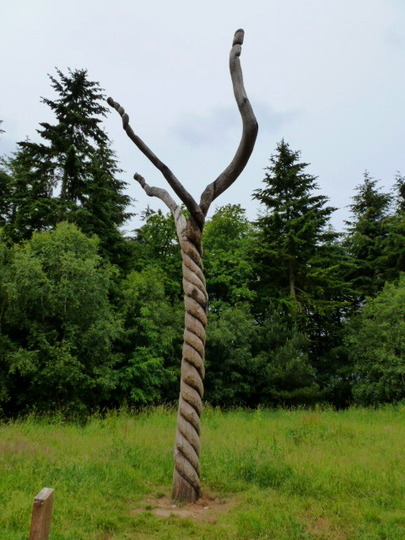 Twisty Tree  !