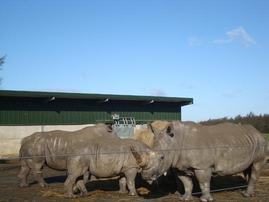 DSC02837 640x480 White Rhinos.