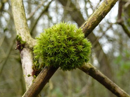 Last moss
