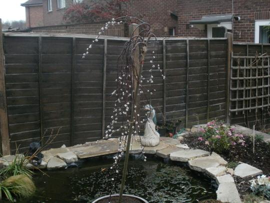 new tree (Salix caprea 'Kilmarnock')