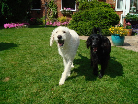 Pepper with friend Bailey