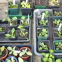 Happy survivors in the cold frame. :))