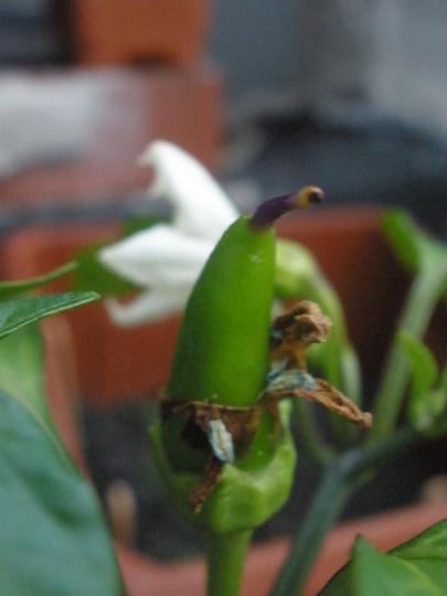 Hot_Banana_5-31-08__5.jpg