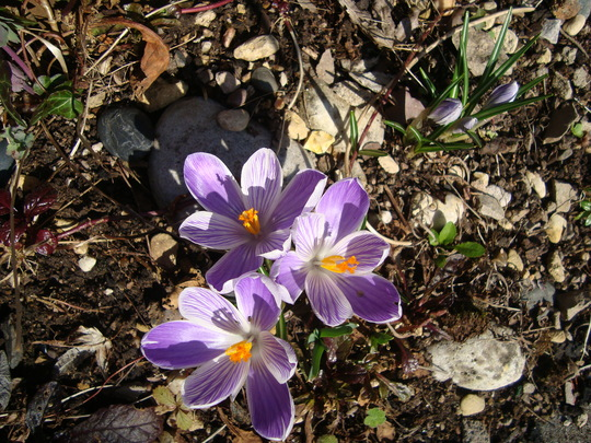 Spring awakening!!