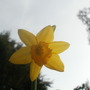 closer of inside the trumpet (narcissus jetfire)