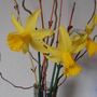 first picked flowers of 2012 (Narcissus)