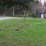 Haskap_bushes_planted