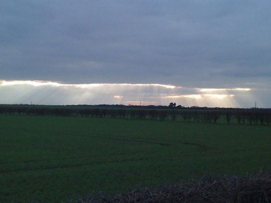 Dog walking, looking across the fields.