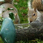 Squirrels.1