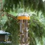Birds_on_suet_hairy_woodpecker_on_tree