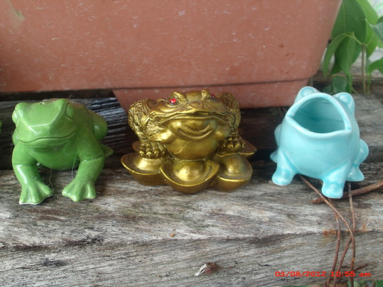 my froggie collection