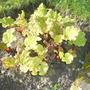 Rhubarb Update