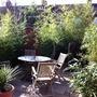 jungly garden