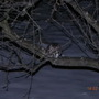 Owl in my apple tree
