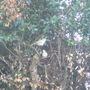 Pair Pigeons