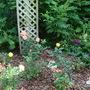 Few of my roses