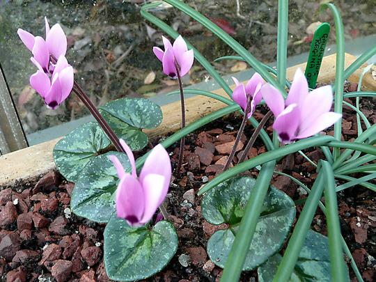 More flowers around the garden 013