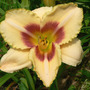 Daylily_custard_candy_6_20_08_exc_med