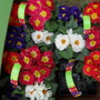 POLYANTHUS FROM MORRISONS