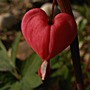 Heart_003