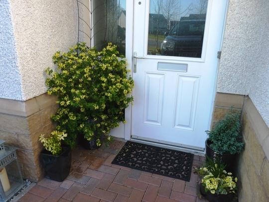 The front door... (Coronilla valentina (Coronille))