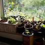 Spring '11 seedlings