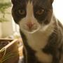 Catnip for Milo