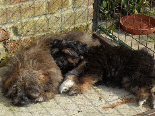 smokey with another pup before he left the breeders...fast asleep