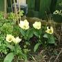 Flowers_005