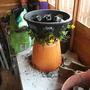 Garden Mar 12 022