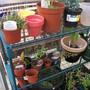 Garden Mar 12 032