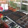 Garden Mar 12 034