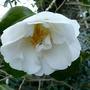 My_garden_in_spring_today_060