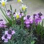 Garden_2858