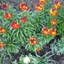 Garden_2856