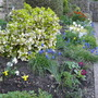 Front border..coming to life :o)
