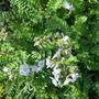 Garden_2854
