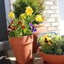Front door flower pots