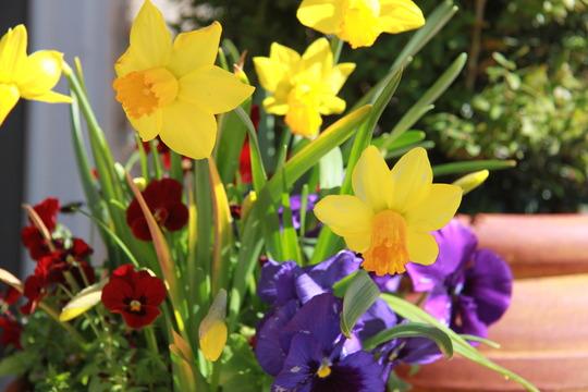 Spring flower combo