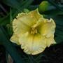 Daylily cross: Orange Aglow X Wonder Of It All (Hemerocallis)