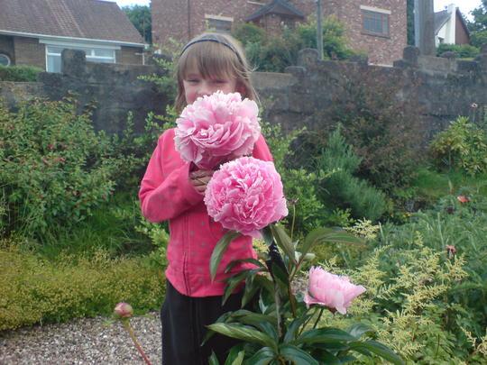 pink peony 2009