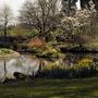 Llanover garden3