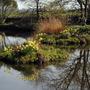 Llanover Garden 4