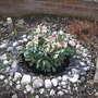 garden 010