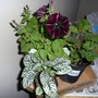 New flowers March 2012
